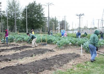 DTE Energy Garden October Harvest 7