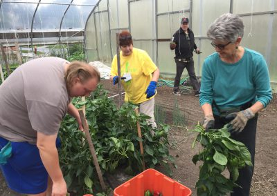 Urban farm yields bountiful time for ATTH volunteers 3