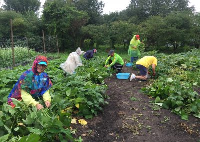 Urban farm yields bountiful time for ATTH volunteers 1