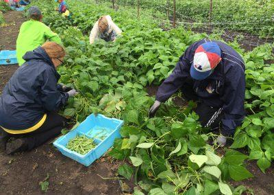 Urban farm yields bountiful time for ATTH volunteers 2