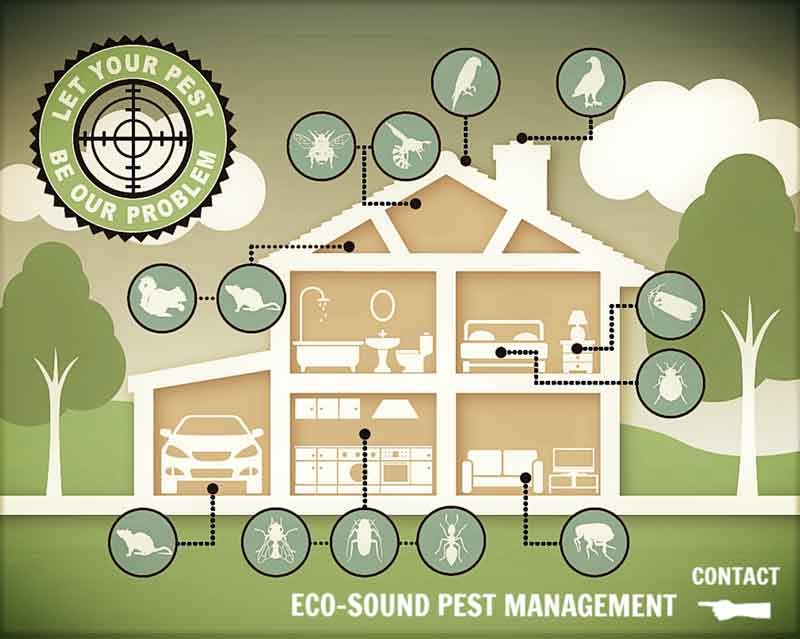 Eco-Sound Pest Management Steps Up for DMCII