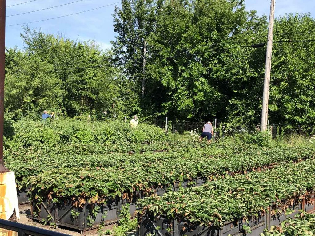 Group Gardening at Big Glen Brings 'A Time to Help' Together Again 14